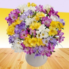Hampers and Gifts to the UK - Send the Fragrant Freesias Flowers