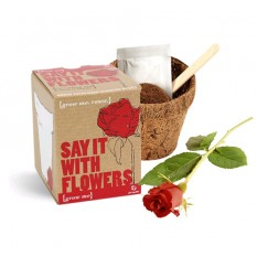 Hampers and Gifts to the UK - Send the Grow Me Kit Say It With Flowers