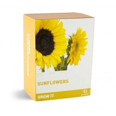 Hampers and Gifts to the UK - Send the Grow It Sunflowers